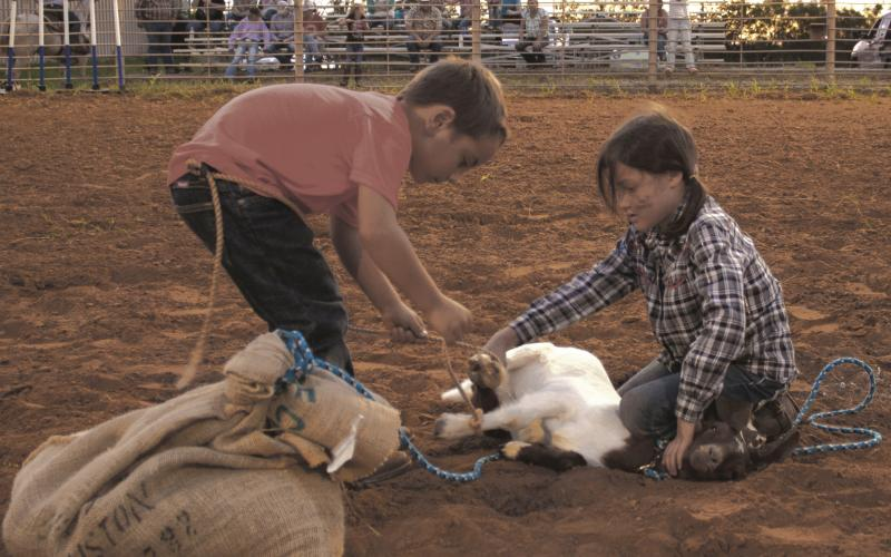 Area kids work together during the Breckenridge Junior Rodeo Goat Bagging Event Saturday.